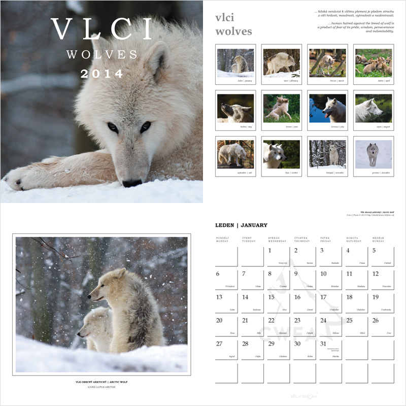 Kalendář Vlci 2014 | CWFA [fotografie Filip Chludil]